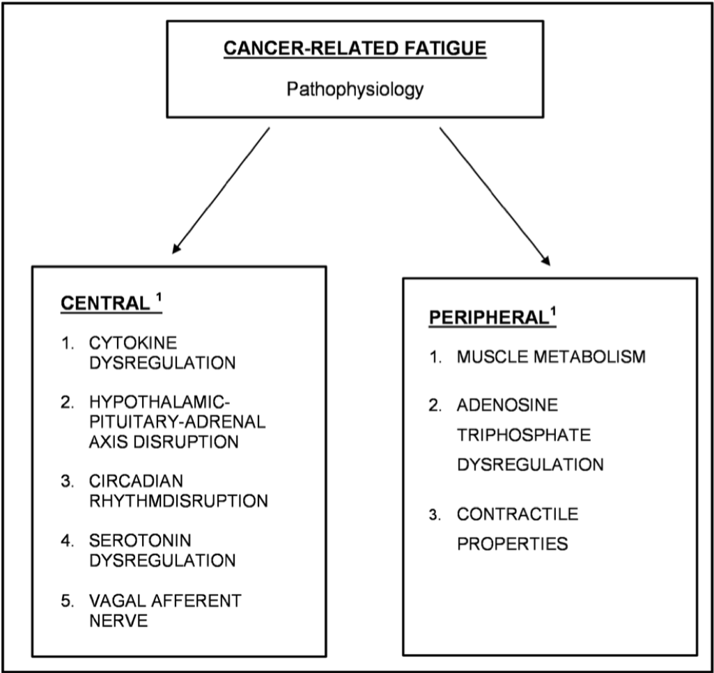 The pathophysiology of cancer-related fatigue: current controversies ...